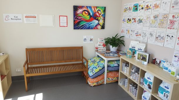 cat waiting room at bentons road vet in mount martha
