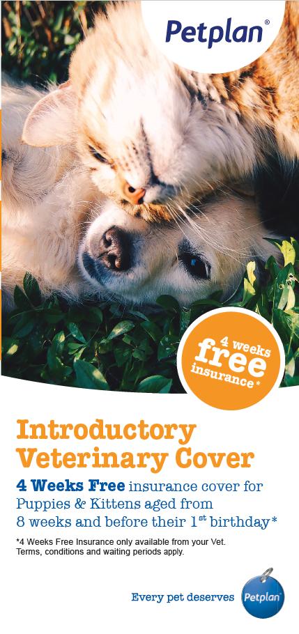 Pet Plan Pet Insurance Orange Dot Brochure