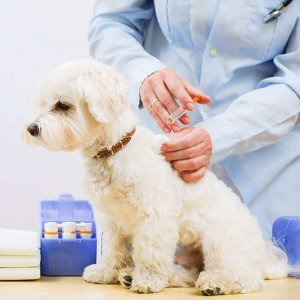 titre test dog vaccination