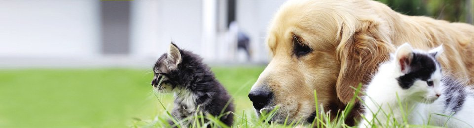 2 kittens and dog lying on lawn
