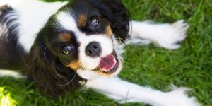 pet dental disease